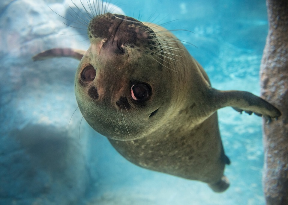 Behind-the-Scenes Tour: Seals and Sea Lions